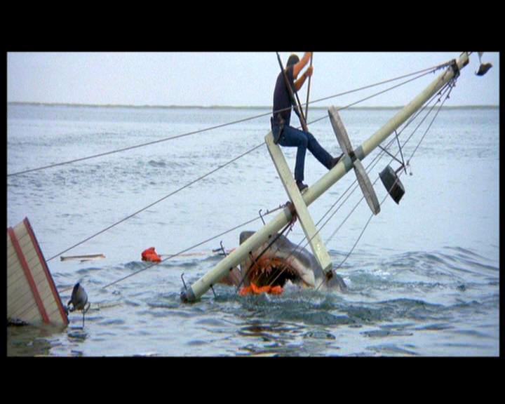 haai valt mens aan
